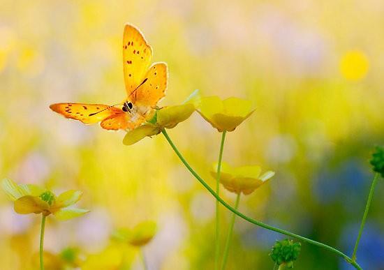 giallo donne