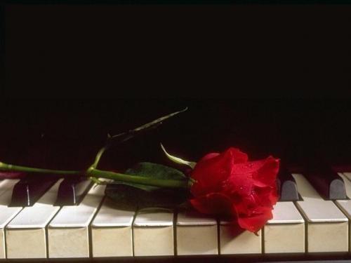rosa-rossa-pianoforte