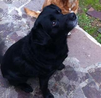 Il cagnolino più bello del mondo!!!
